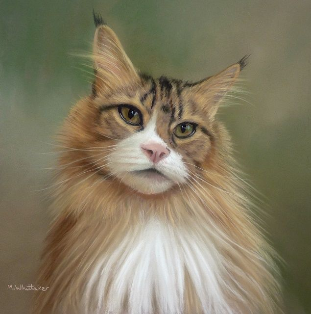 Original Pastel Painting of Cheyanne the Maine Coon.