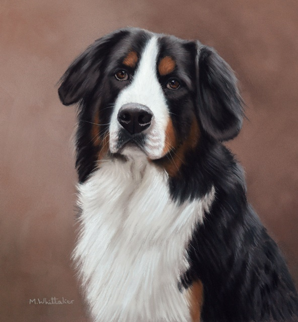 Original Pastel Painting Of Bernese Mountain Dog, Oakley