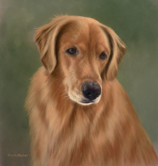 Original Pastel Painting Of Kali The Golden Retriever.