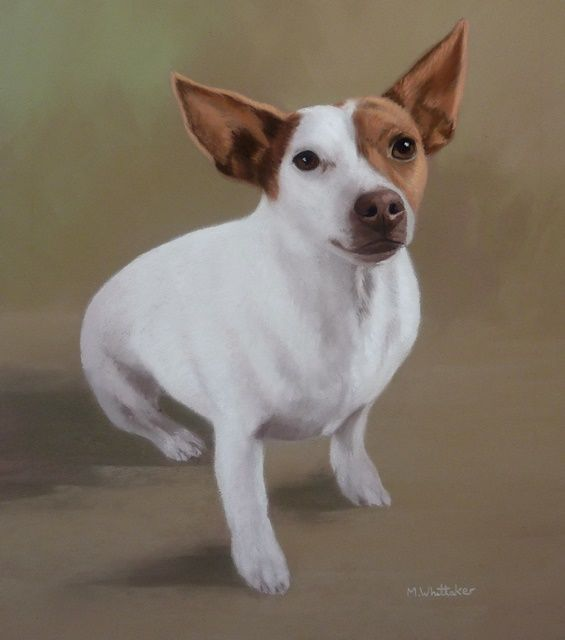 Original Pastel Painting of Maisie.