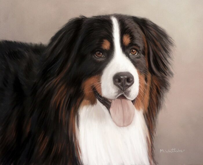 Original Pastel Painting of Merlin the Bernese Mountain dog.