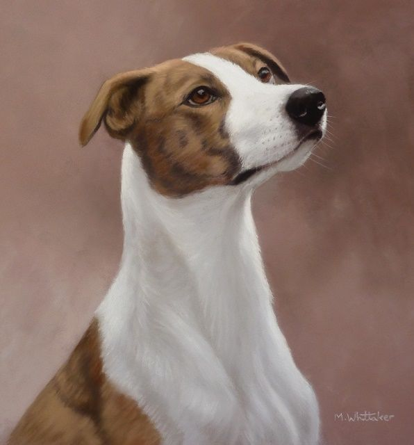 Original Pastel Painting of Phoebe the lurcher.