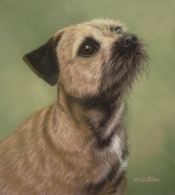 Original Pastel Painting of Millie The Border Terrier.