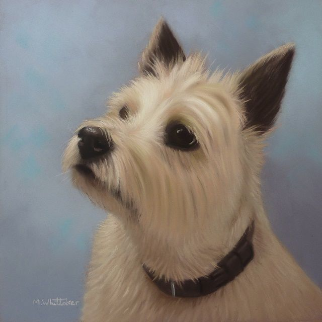 Original Pastel Painting of Buffett the cairn terrier.