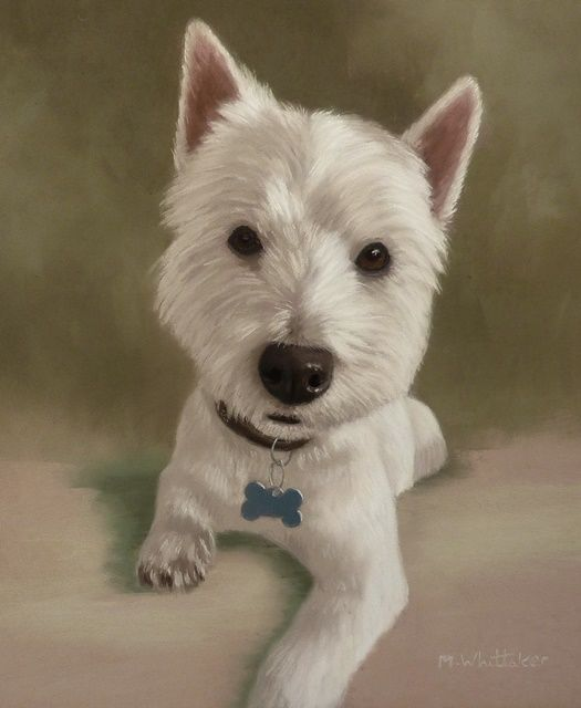 Original Pastel Painting of William The Westie.