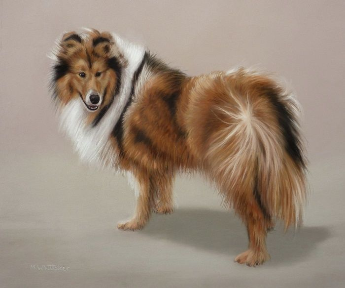 Original Pastel Painting of Lassie The Rough Collie.