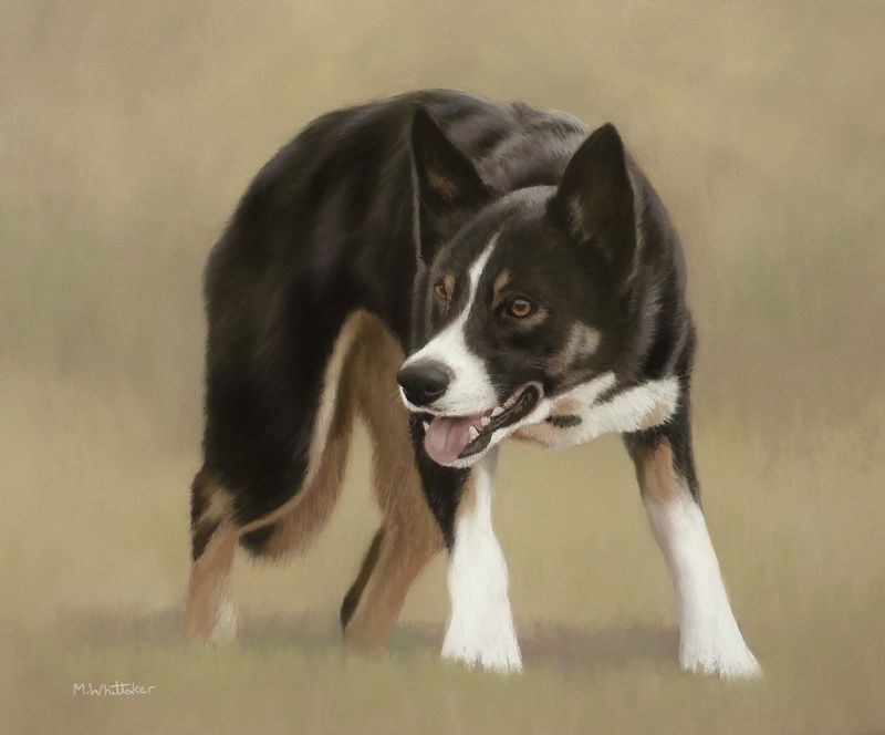 Original Pastel Painting of Jess The Border Collie.