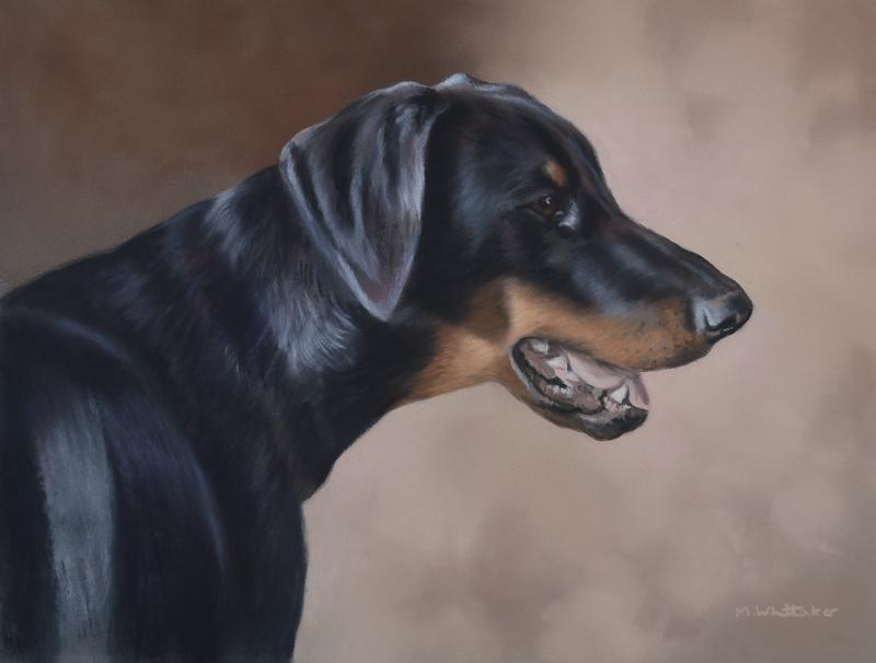 Original Pastel Painting Of Doberman.