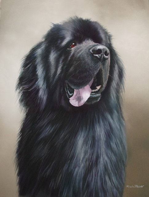 Original Pastel Painting Of Basil, Newfoundland