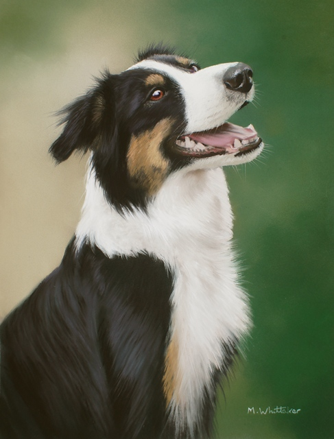 Original Pastel Painting Of Jess, Border Collie