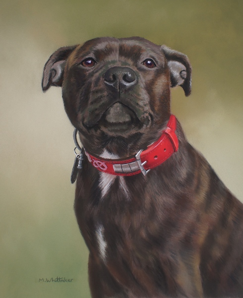 Original Pastel Painting Of Pippa, Staffordshire Bull Terrier