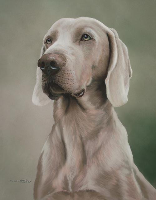 Original Pastel Painting Of Bentley, Weimaraner