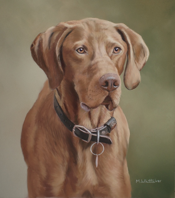 Original Pastel Painting Of Ruddles, Hungarian Vizla