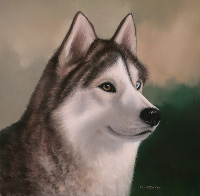 Original Pastel Painting Of A Husky.