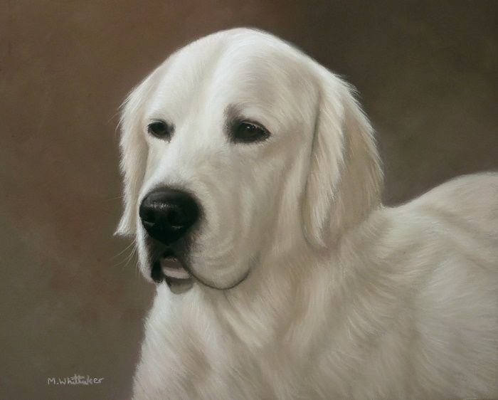 Original Pastel Painting of Traveller the golden retriever.