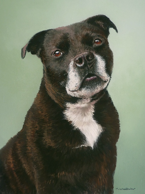 Pastel Portrait Of Charly, Staffordshire Bull Terrier
