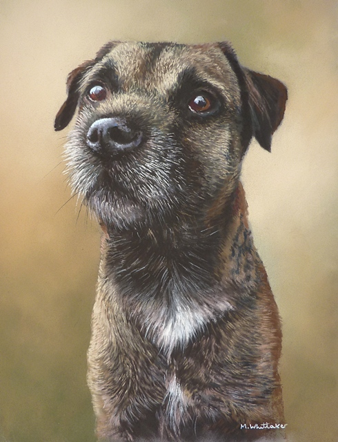 Pastel Portrait Of Grouch, Border Terrier