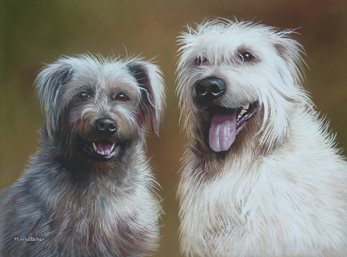 Pastel Portrait Of Molly & Finan, Glen Of Imaal Terriers