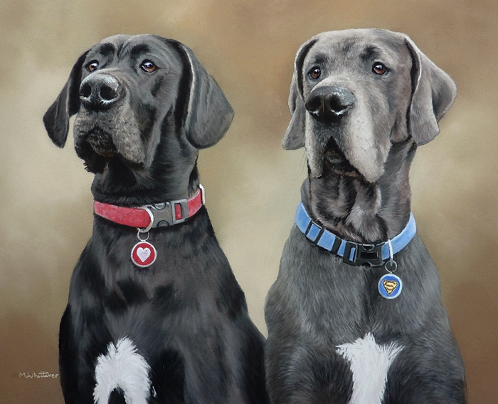 Pastel Portrait Of Brenna & Merlyn, Great Danes.