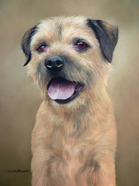 Pastel Portrait Of Danny, Border Terrier