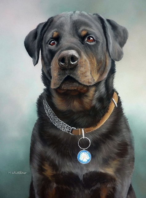 Pastel Painting Of Smithy, Rottweiler