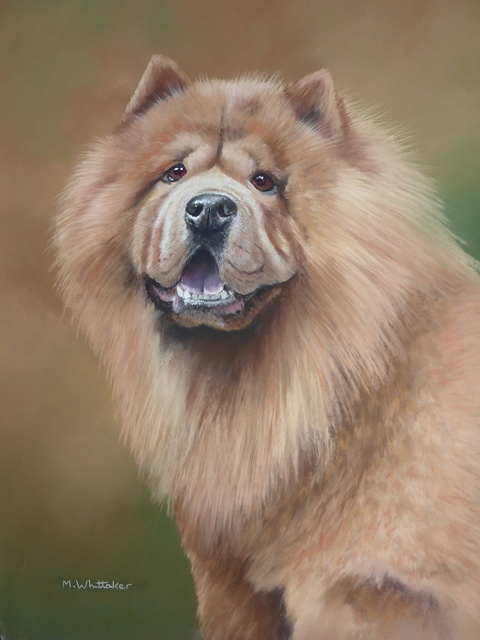 Pastel Painting Of Chas, Chow Chow