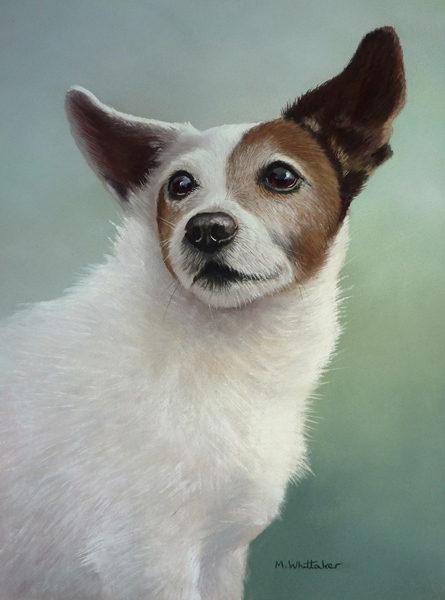 Pastel Painting Of Bobby, Jack Russell Terrier