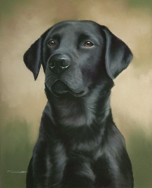 Pastel Painting Of Elgar, Black Labrador