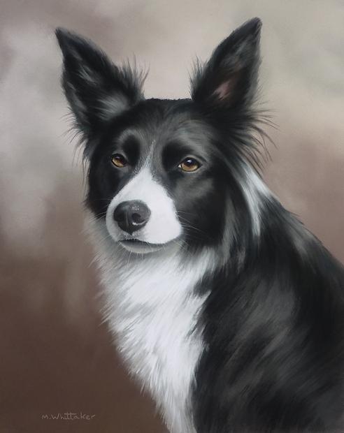 Original Pastel Painting Of Gwen, Border Collie