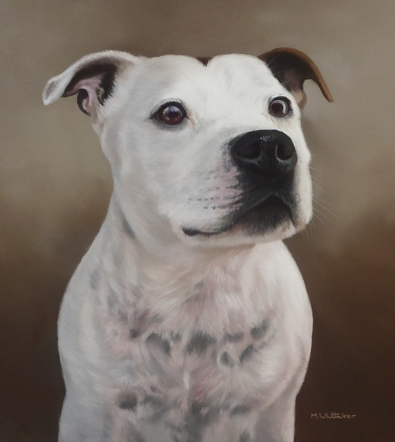 Original Pastel Painting Of Jake, Staffordshire Bull Terrier
