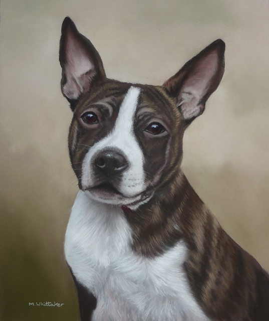 Original Pastel Painting Of Suzy, Staffordshire Bull Terrier.