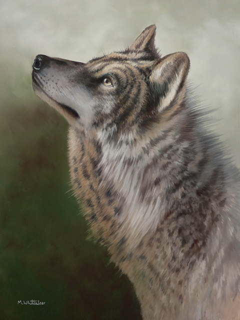 Original Pastel Painting Of Timber Wolf