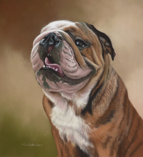 Original Pastel Painting Of Buster, British Bulldog.