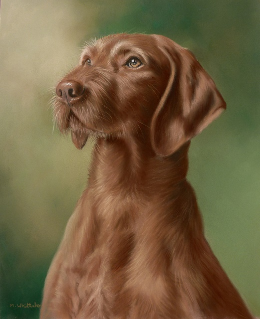 Original Pastel Painting Of Wire Haired Viszla