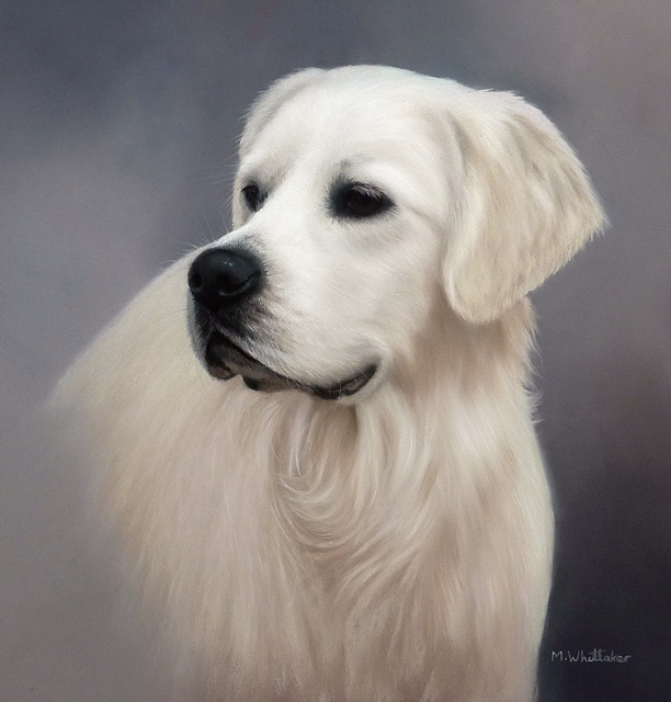 Original Pastel Painting Of Finn.