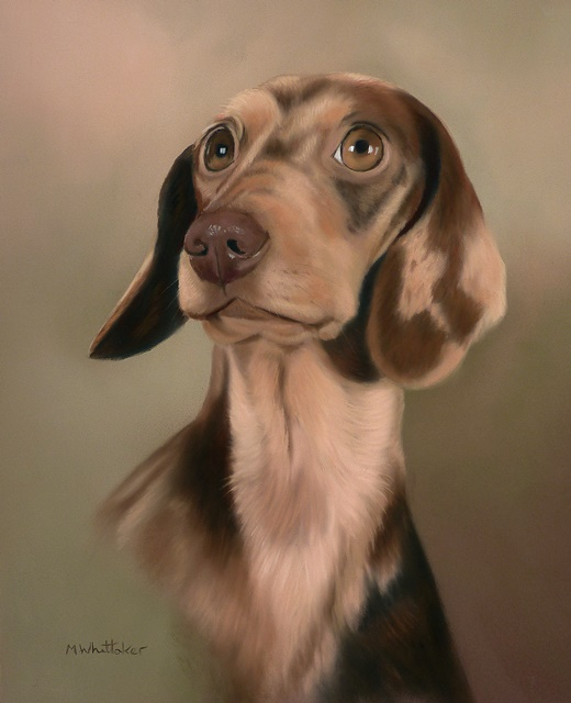 Original Pastel Painting Of Beau The Dachshund.
