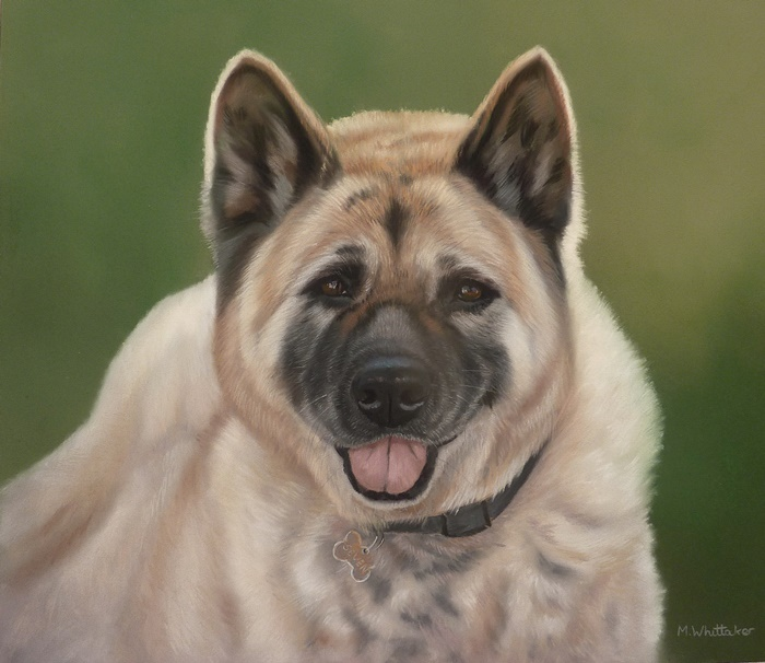 Original Pastel Painting Of Seven The Akita.