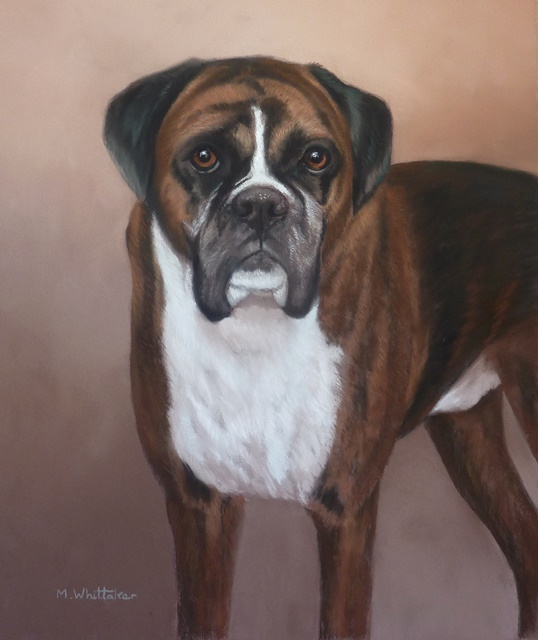 Original Pastel Painting Of Dillon The Boxer.