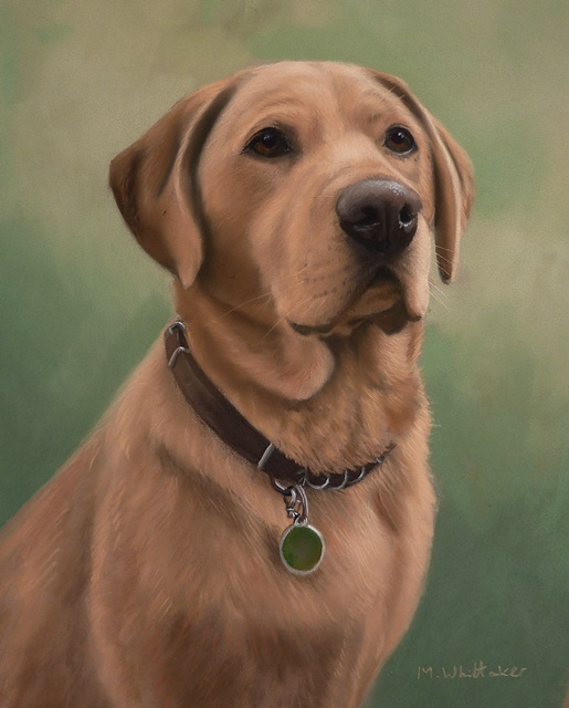 Original Pastel Painting Of Labrador Retriever.