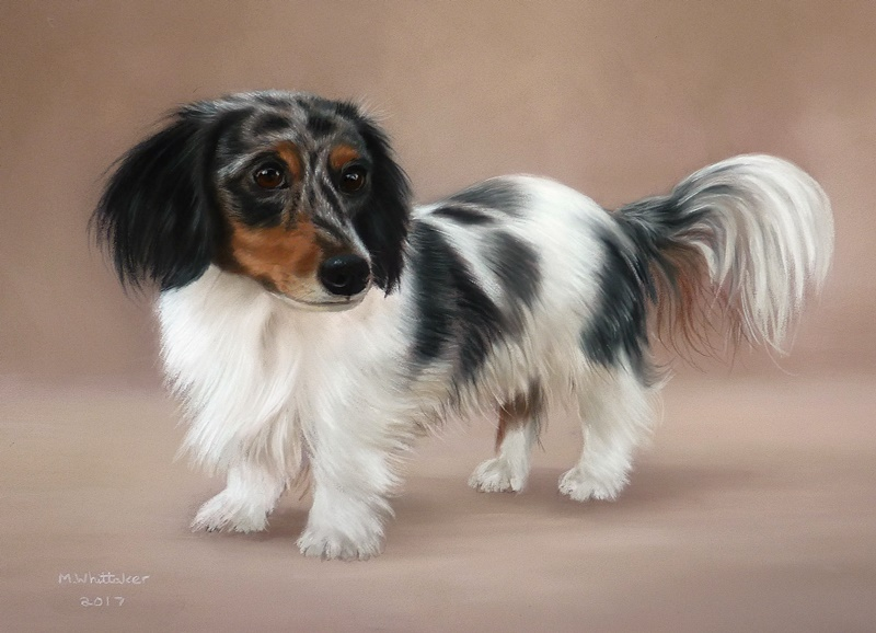 Original Pastel Painting Of Farrah The Dachshund.