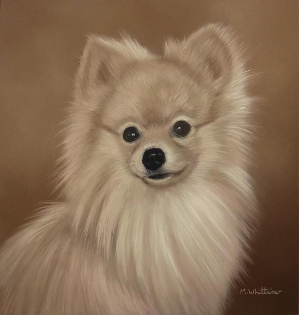 Original Pastel Painting Of Rupert The Pomeranian