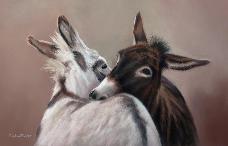 Playful Donkeys