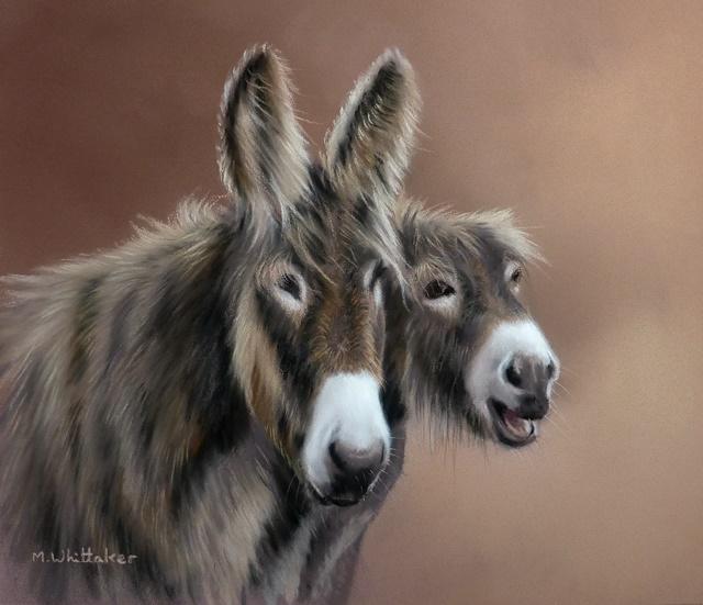 Poitu Donkeys