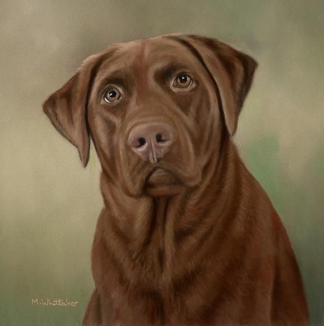 Original Pastel Painting Of Meggie The Chocolate Labrador