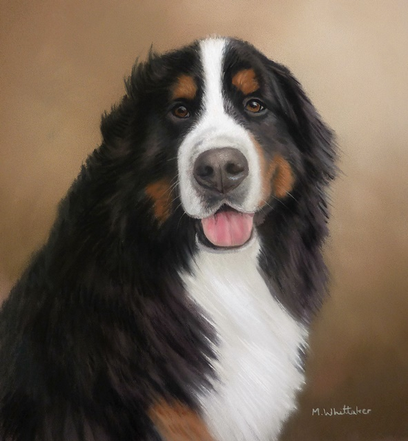 Original Pastel Painting Of Bernese Mountain Dog, Andre.