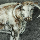 Longhorn Cattle Hand Tinted Drawing