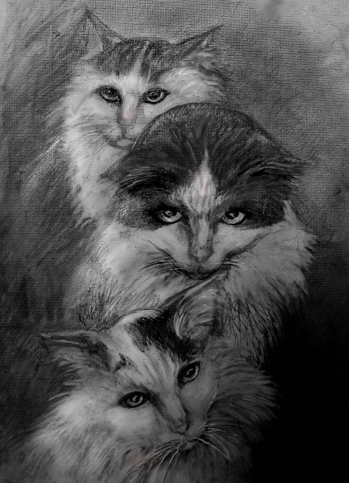 Drawings of Cats