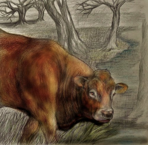 Limousin Cattle. Drawings and Paintings.