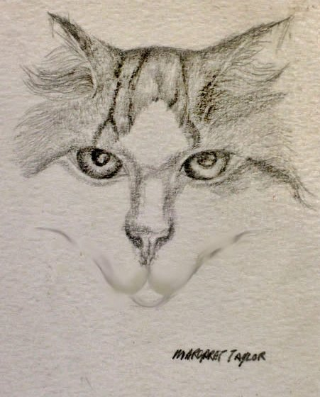 Cat Portrait (Drawings and Paintings of Cats)