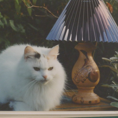 Photo of Chippy as a model (Day Job). Hand Painted Lamp Commissions £50-£150.